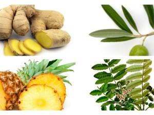 Herbal Remedies for Inflammatory Diseases